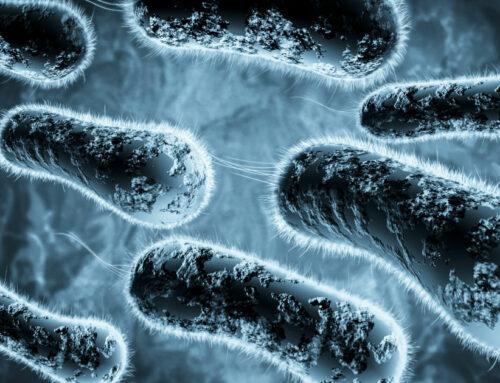 Cuales son las Principales Bacterias Patógenas en Alimentos