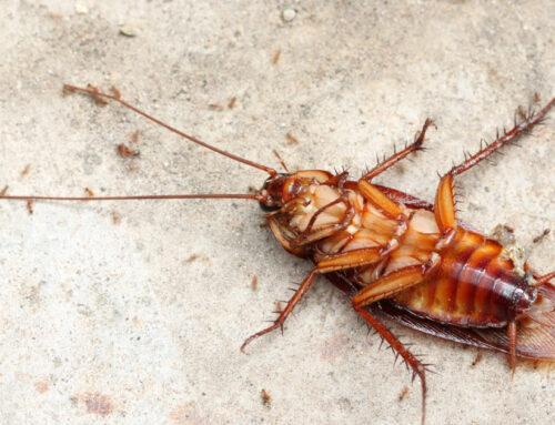 Cómo Eliminar Cucarachas y Otros Insectos de Manera Efectiva