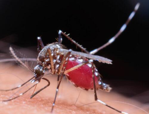 10 Datos Curiosos Sobre Plagas