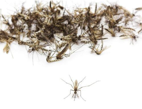 Control de Mosquitos y Vectores en Bogotá